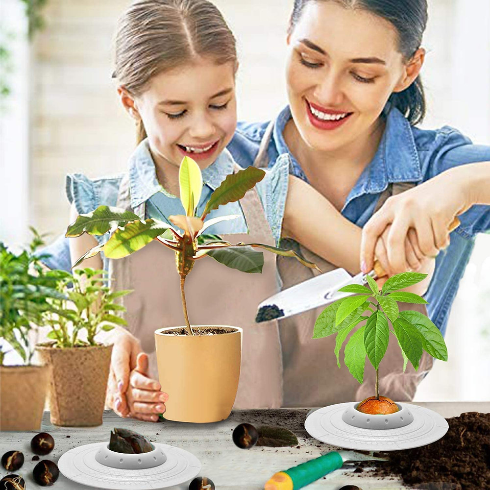 Avocado starter kit gardening gardens growing food sustainability