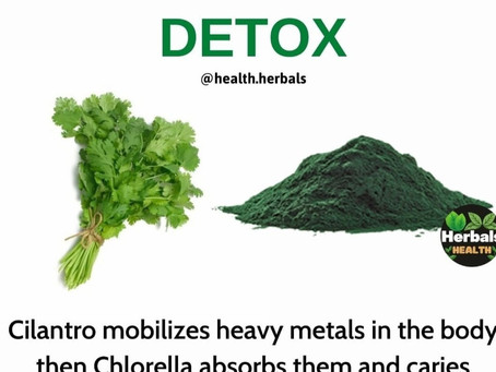 Heavy Metal Detoxing With Cilantro