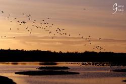 Sunset birds