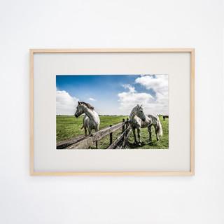 White Horses, Galway  IRELAND
