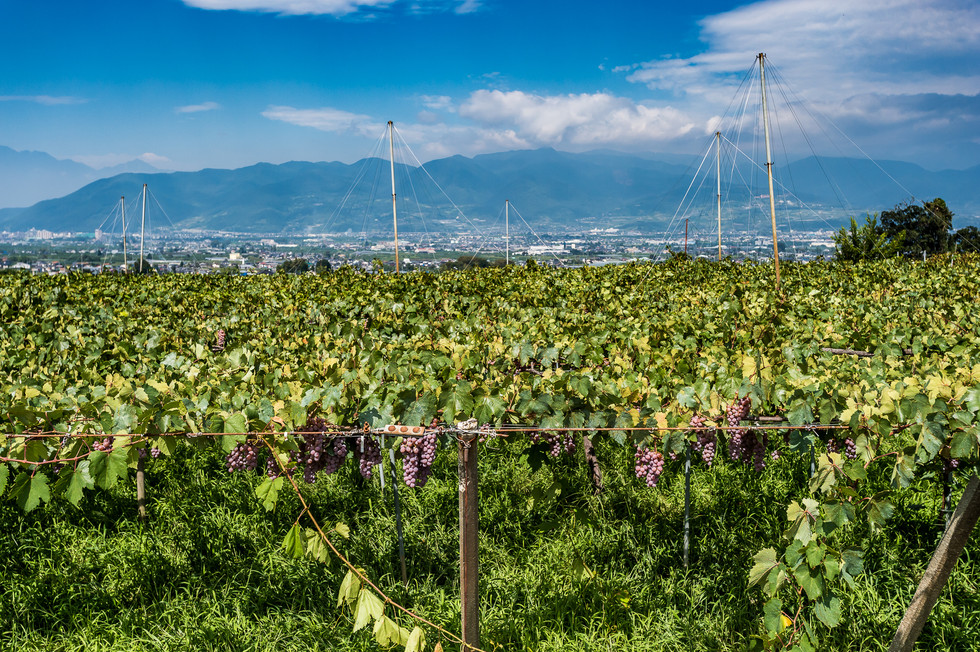 A Guide to WINE IN JAPAN / JFOODO x MONOCLE