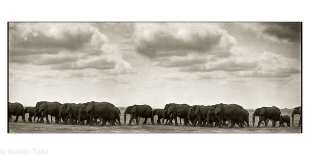 Elefhant at Tsavo National Park
