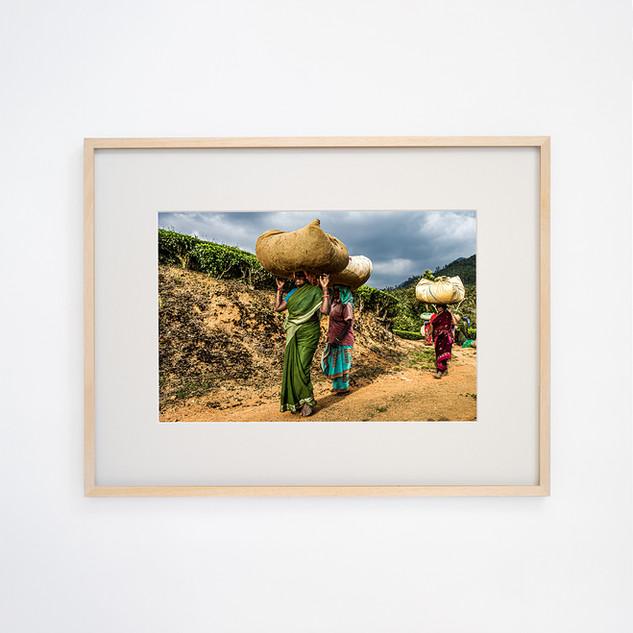 Tea picking women's ③ Talayar Kerala, INDIA
