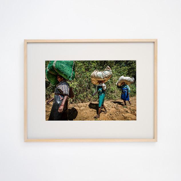 Tea picking women's ⑤ Talayar Kerala, INDIA
