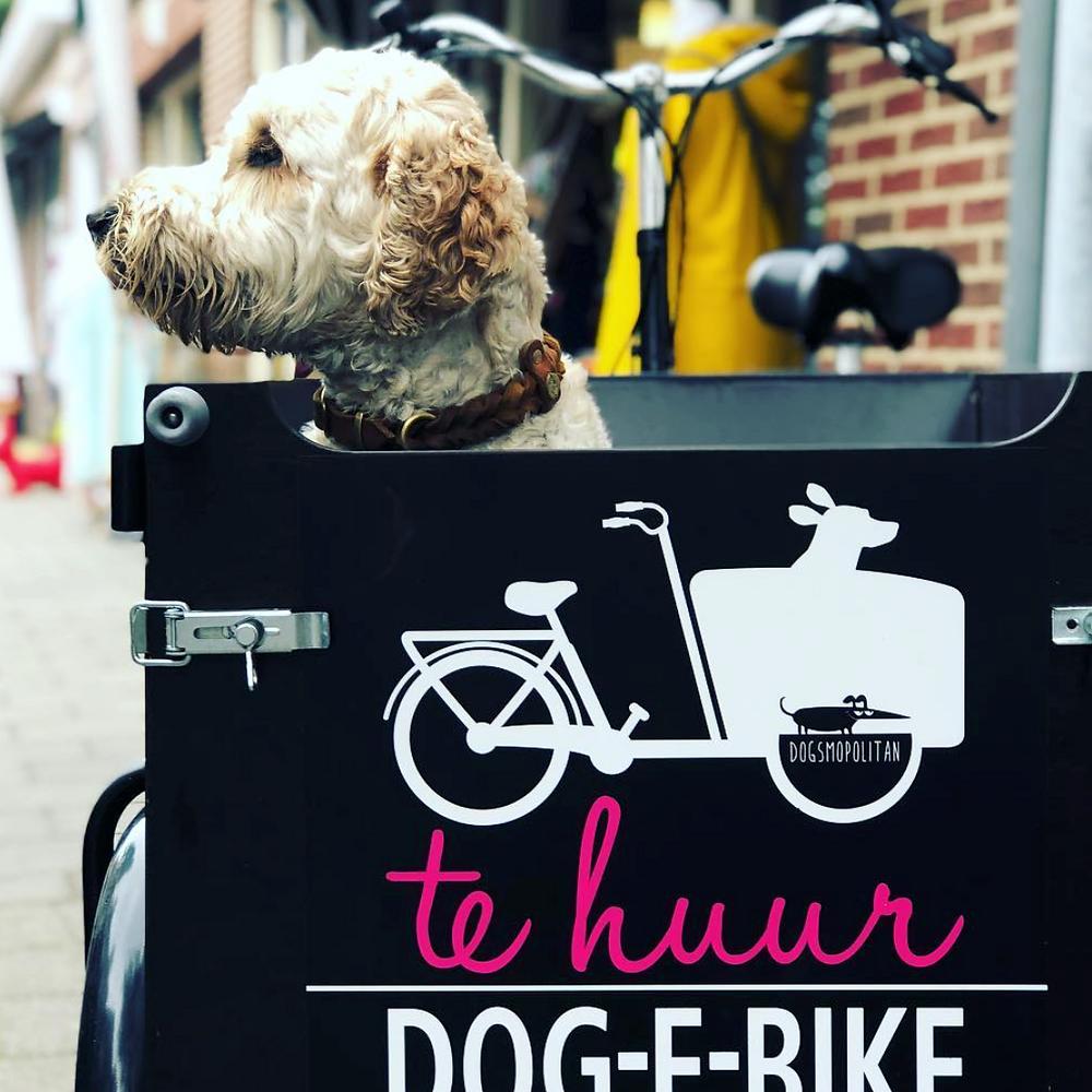 Dog-E-Bike Dogsmopolitan Domburg