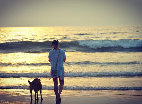 Start der Nebensaison - Hunde wieder ganztägig am Strand von Domburg erlaubt