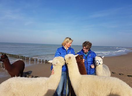 Nicht nur Hunde fühlen sich am Strand von Domburg wohl