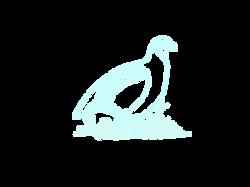 Grey Partridge 1