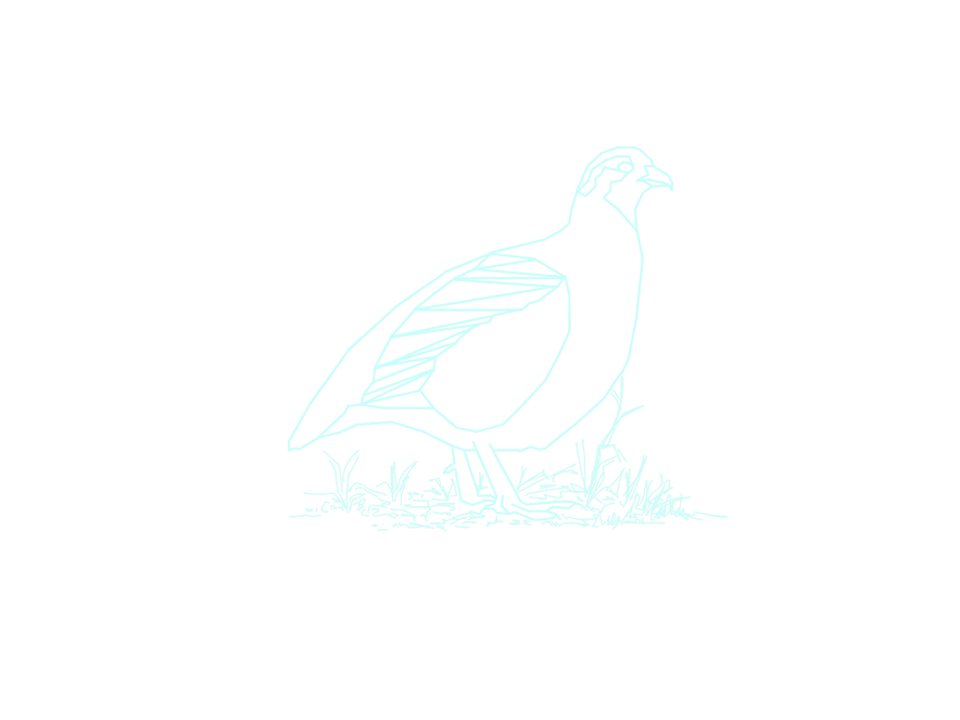 Grey Partridge 1.png