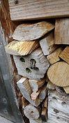 leafcutters in bugbox.jpg