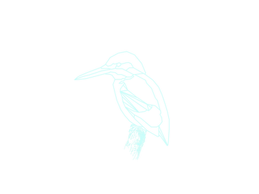 Kingfisher_edited.png