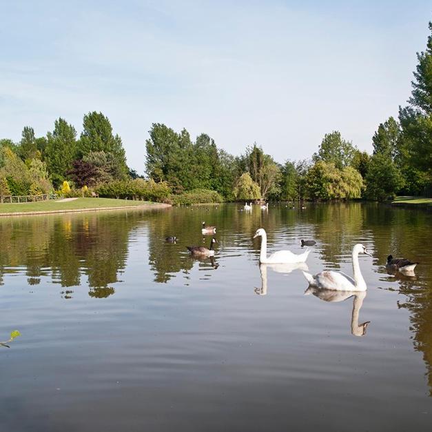Swan Sanctuary