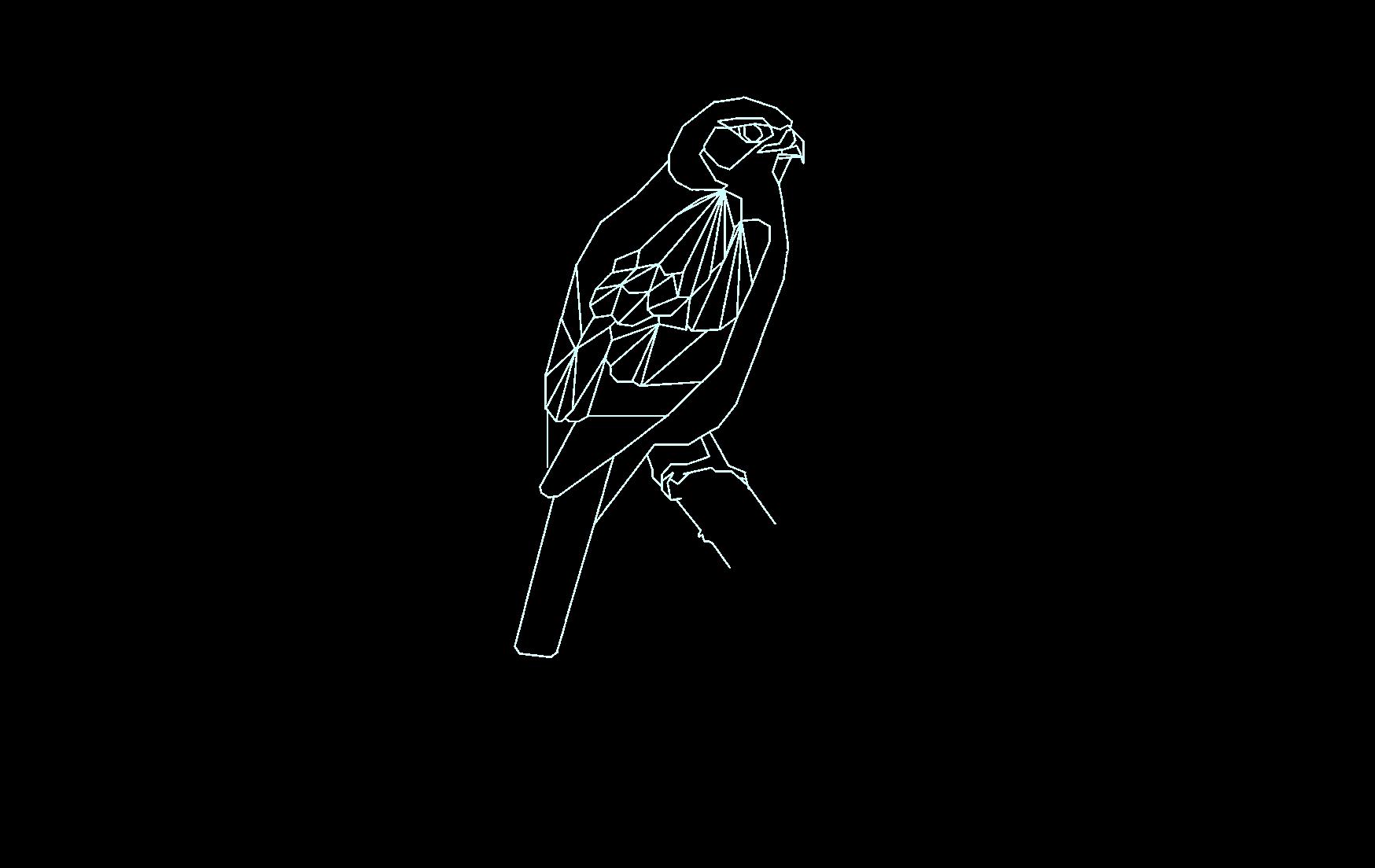 Sparrowhawk