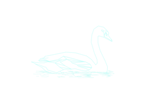 Mute Swan.png
