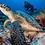 Thumbnail: Junior Marine Biologist -Virtuele training