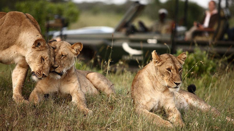 &Beyond Private Safari