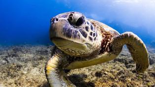 冬天哪裡可以潛水? 四個冬天也能潛水的地方