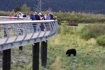 bearwalkway.jpg