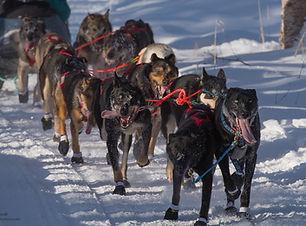 AK_Iditarod2019_dogteam.jpg