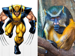 Whoa...The Wolverine Monkey - The hero we deserve!