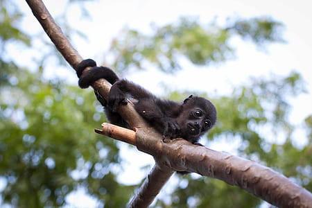 animal-animal-photography-baby-cute-thum