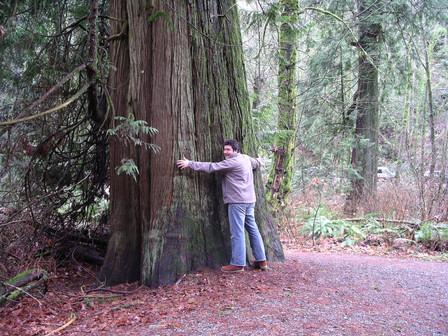 Goldstream-Treehugger.jpg