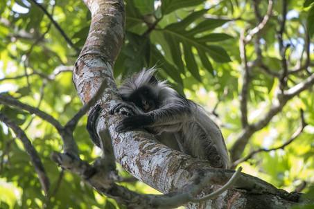 monkey-nature-animals-the-primacy-of.jpg