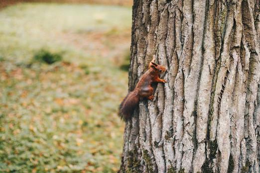 animal-bark-brown-color.jpg