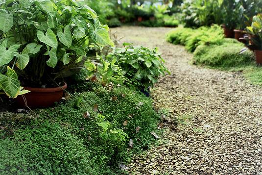 Botanical%2520Garden%2520_edited_edited.