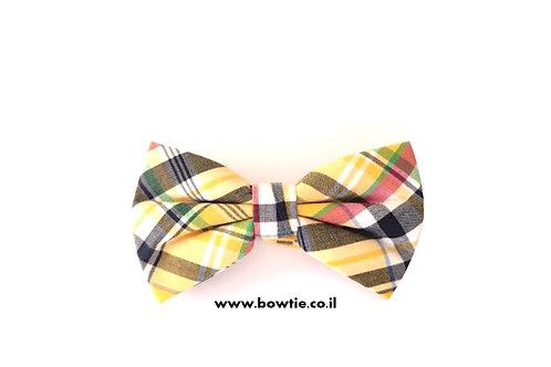 עניבת פפיון צבעונית סקוטית