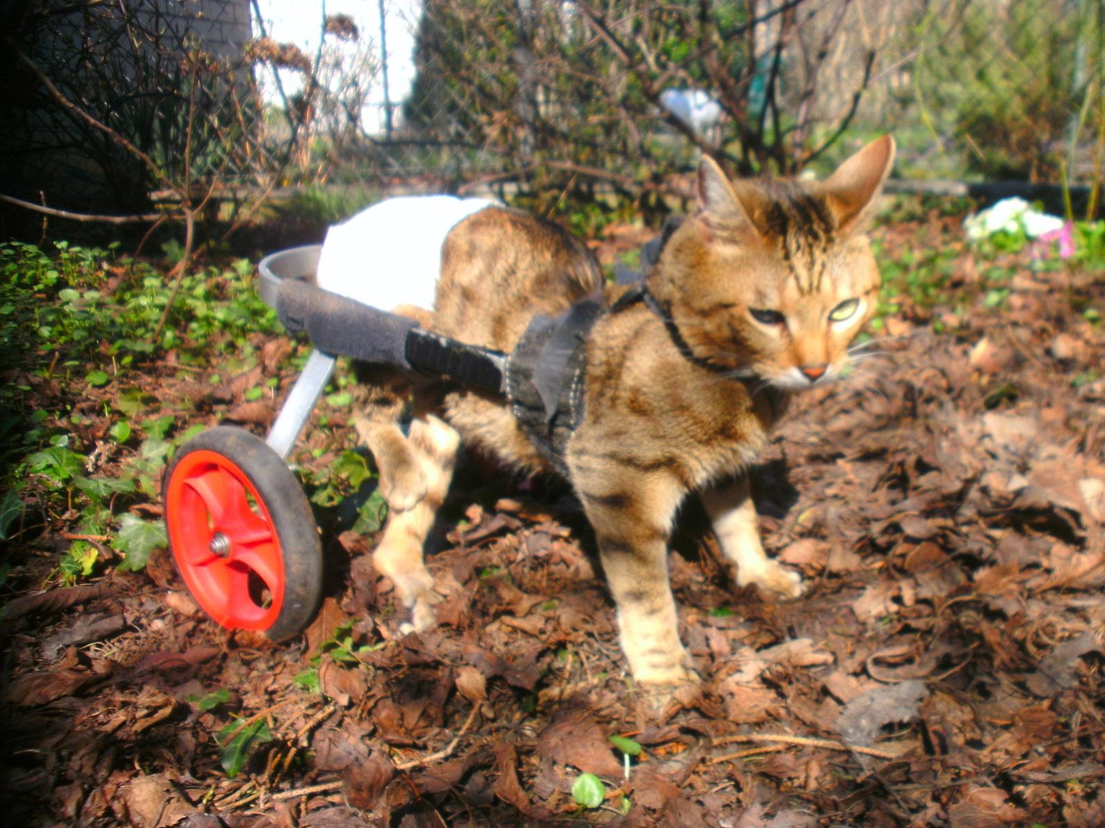 Katze_Rolli_stehend