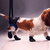 Walkabout-Hunde-Gehhilfe-Tragehilfe-Hint