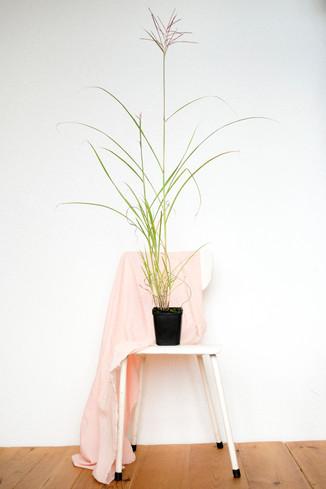 Kore_FlowerplantsDEF_111.JPG