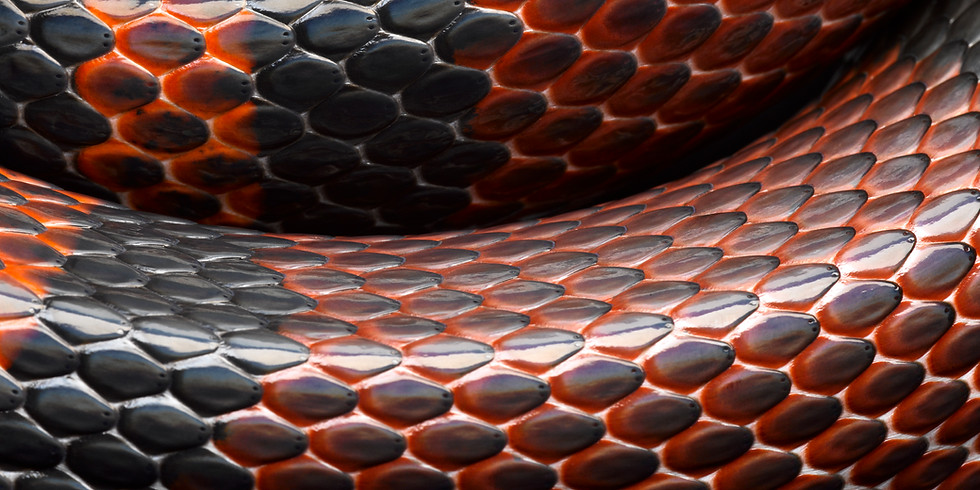 REGISTER NOW - Tails and Scales