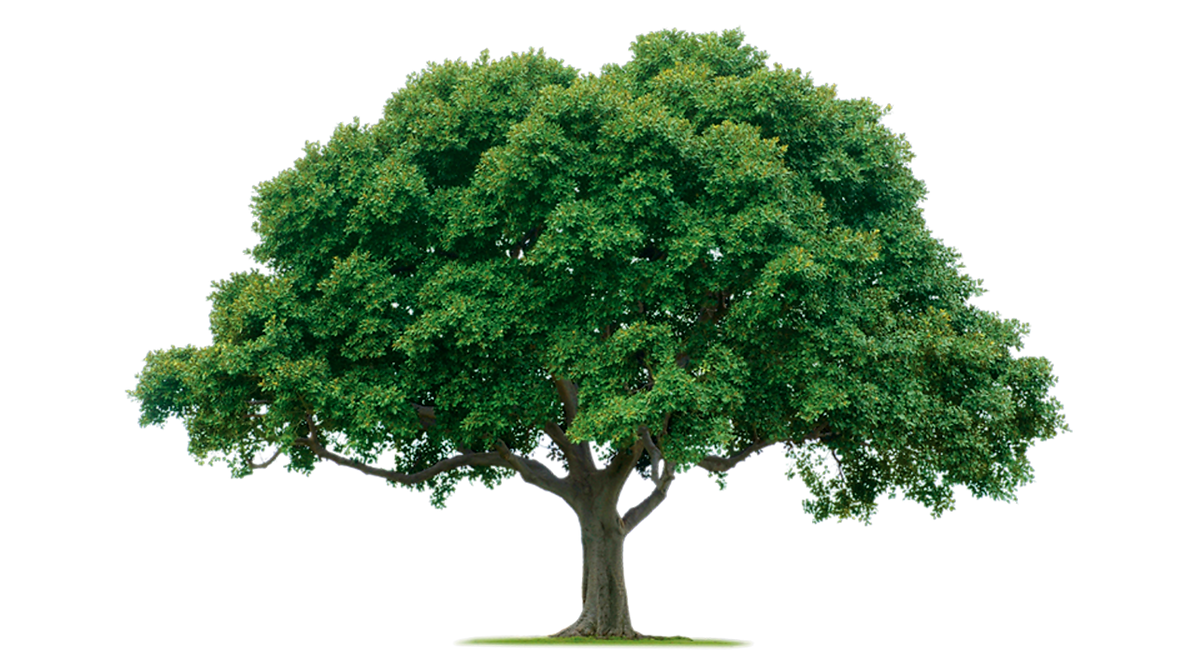 tree_PNG92714.png