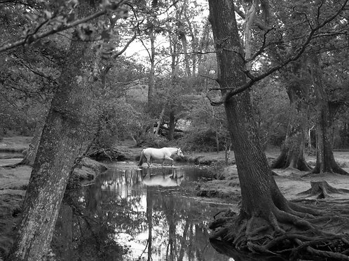 Whitefield Moor, The New Forest