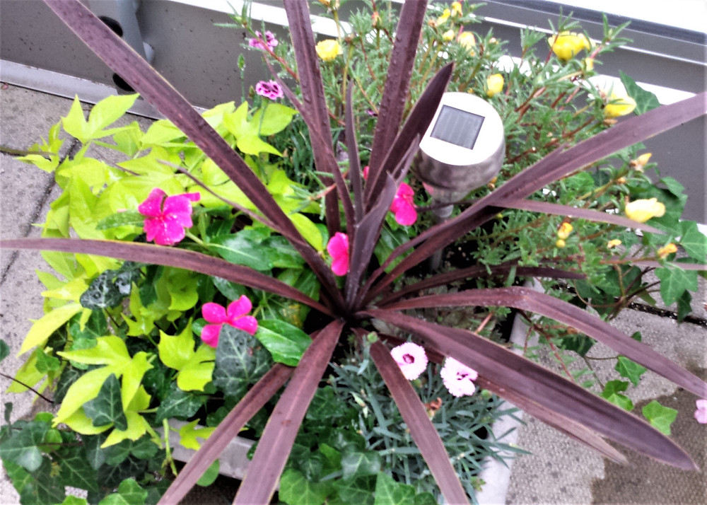 annual flowers, container gardening