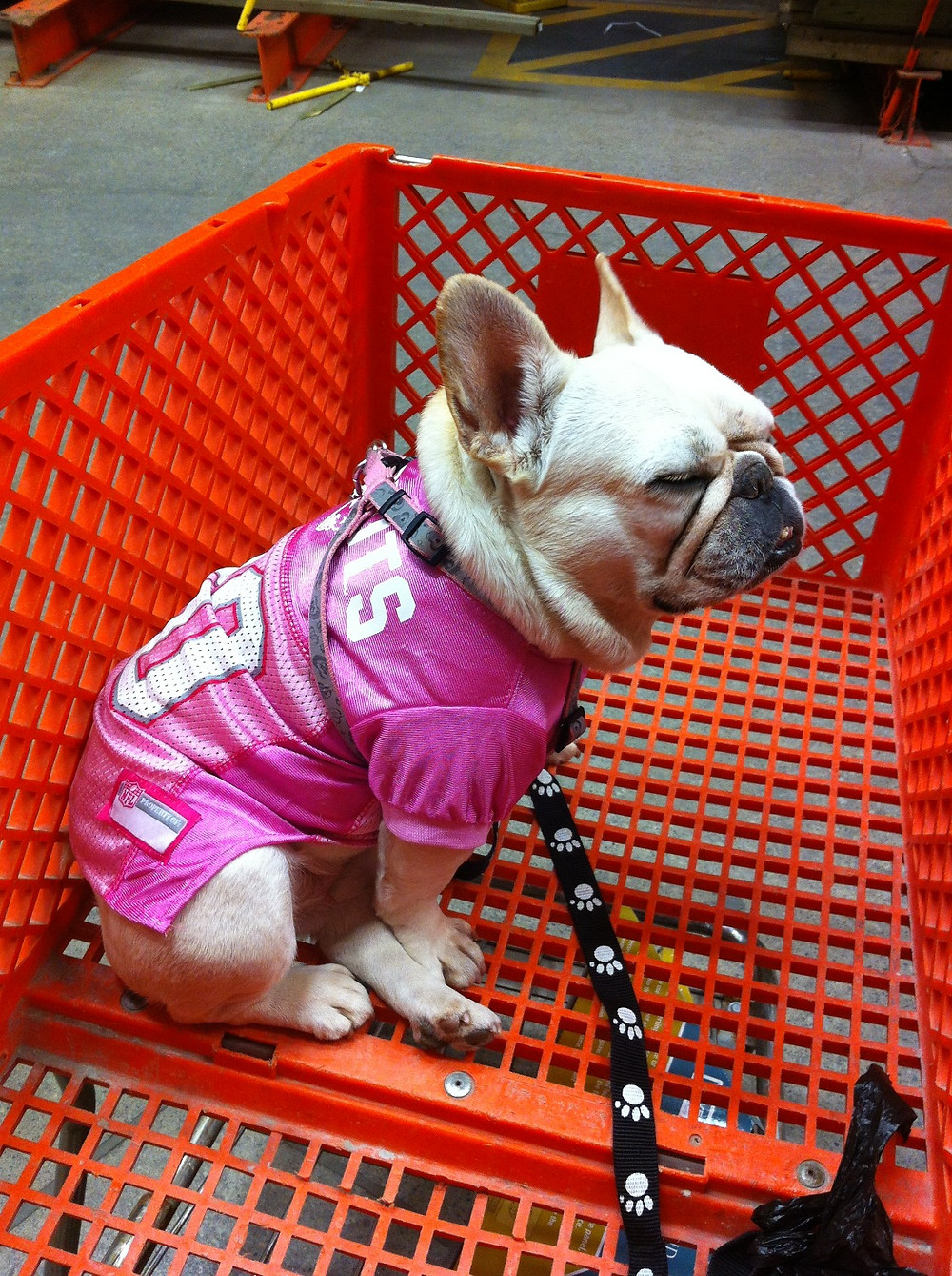 Mona, our french bulldog landscaper at Home Depot