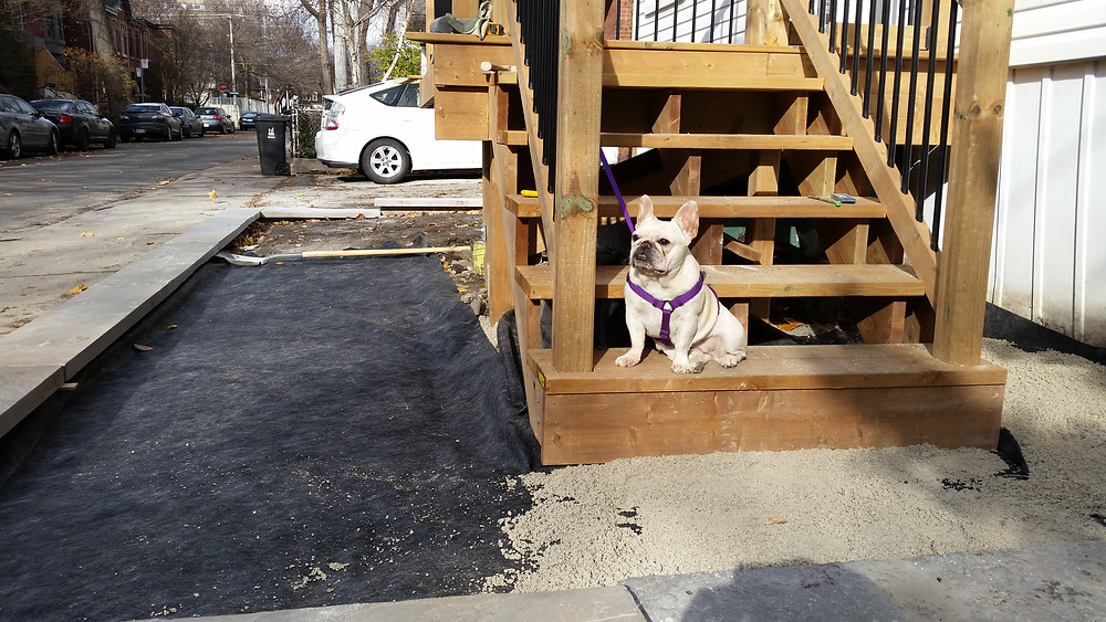 Mona, our french bulldog landscaper, sitting on the newly constructed front porch