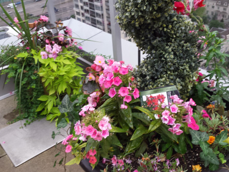 Landscaping Guide to Container Gardening