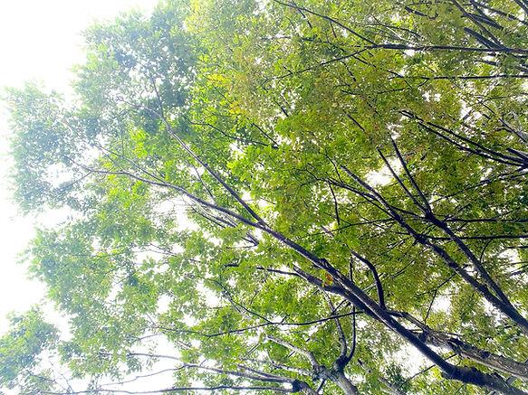 green-sus.jpg