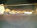 Cadáver supuestamente extraterrestre