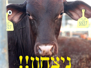 השבוע הצלחנו למנוע הקמת הסגר נוסף! WIN!! Another prevention of establishment of another quarantine!