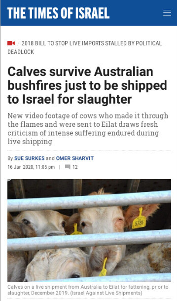 16-20-20 Calves survive Australian bushfires just to be shipped to Israel for slaughter