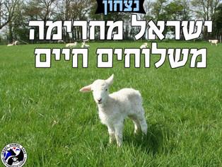 ישראל מחרימה משלוחים חיים  ISRAEL BANS LIVE ANIMAL SHIPMENTS