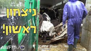 חברת ההובלה קואנרד איבדה את הרשיון שלה להובלת בעלי חיים בליטא Firma Konrad, A Polish carrier who has