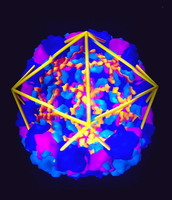 Human_Rhinovirus_14.JPG