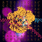 CRISPR_P2.jpg
