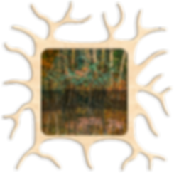 MicrogliaPHSCologram-I.png