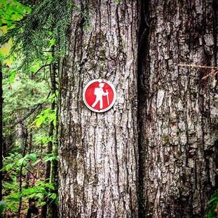 #trailmarker #trail #hike #explore #adventure #camping #love #jeep #adirondacks